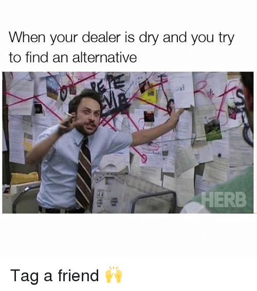 Alternator: When your dealer is dry and you try  to find an alternative  ERB Tag a friend 🙌