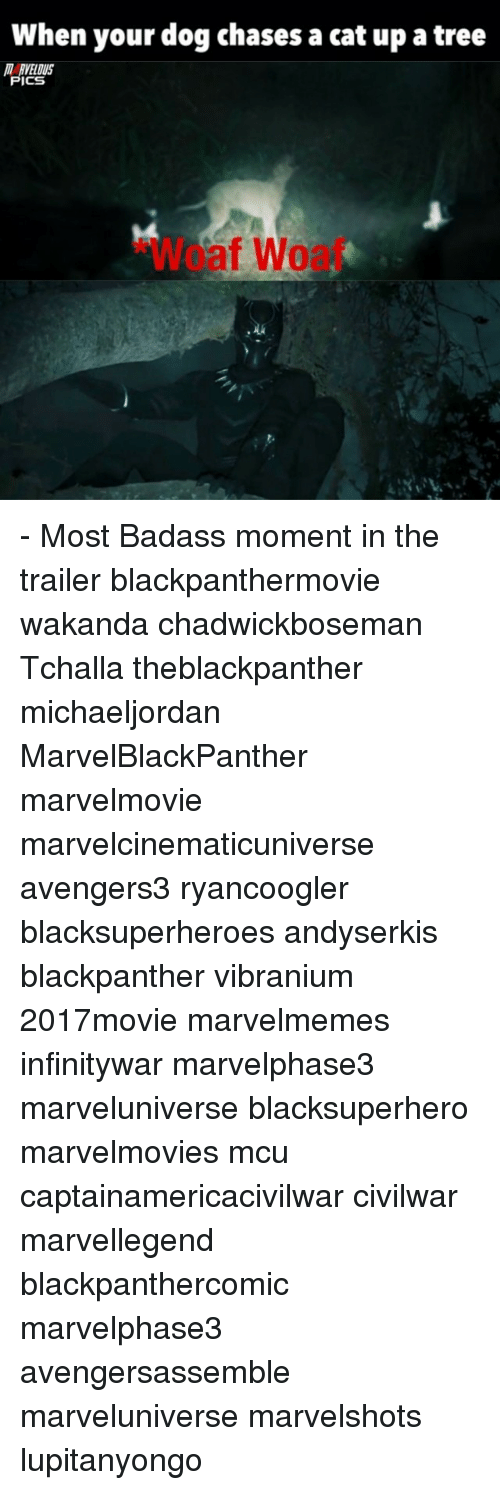Memes, Tree, and Badass: When your dog chases a cat up a tree  MARVELOUS  PICS  WCaf - Most Badass moment in the trailer blackpanthermovie wakanda chadwickboseman Tchalla theblackpanther michaeljordan MarvelBlackPanther marvelmovie marvelcinematicuniverse avengers3 ryancoogler blacksuperheroes andyserkis blackpanther vibranium 2017movie marvelmemes infinitywar marvelphase3 marveluniverse blacksuperhero marvelmovies mcu captainamericacivilwar civilwar marvellegend blackpanthercomic marvelphase3 avengersassemble marveluniverse marvelshots lupitanyongo