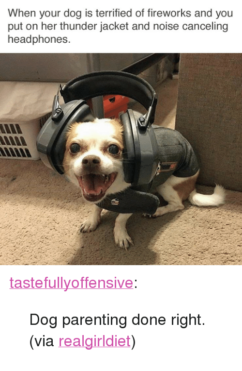"""Parenting Done Right: When your dog is terrified of fireworks and you  put on her thunder jacket and noise canceling  headphones <p><a href=""""http://tumblr.tastefullyoffensive.com/post/162631348638/dog-parenting-done-right-via-realgirldiet"""" class=""""tumblr_blog"""">tastefullyoffensive</a>:</p>  <blockquote><p>Dog parenting done right. (via <a href=""""https://www.reddit.com/user/Realgirldiet"""">realgirldiet</a>)</p></blockquote>"""