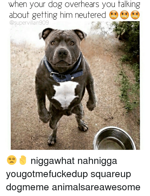Dogs, Dank Memes, and Dog: when your dog overhears you talking  about getting him neutered  C supervi lain9O9 😒✋ niggawhat nahnigga yougotmefuckedup squareup dogmeme animalsareawesome