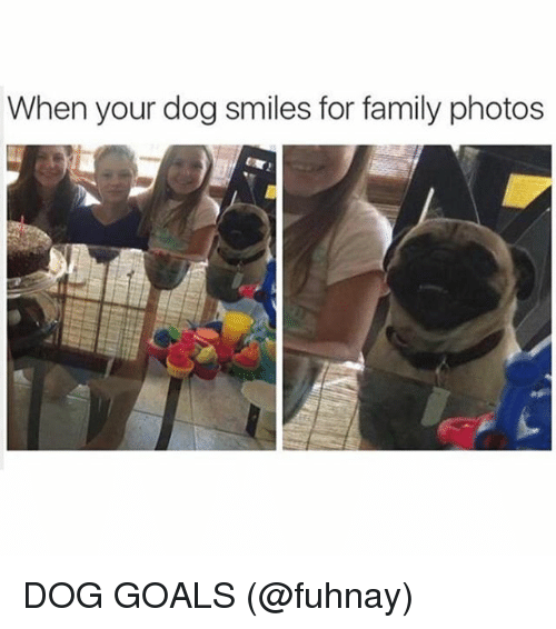 Dog Smile: When your dog smiles for family photos DOG GOALS (@fuhnay)