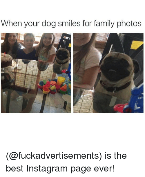 Dog Smile: When your dog smiles for family photos (@fuckadvertisements) is the best Instagram page ever!
