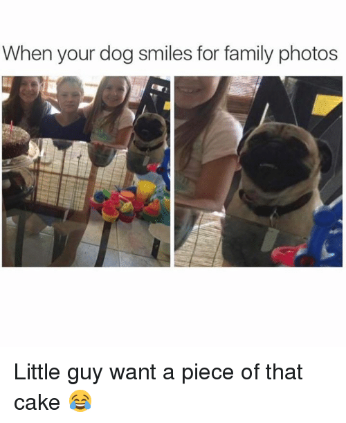 Dog Smile: When your dog smiles for family photos Little guy want a piece of that cake 😂
