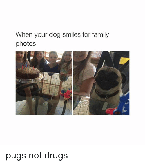 Dog Smile: When your dog smiles for family  photos pugs not drugs