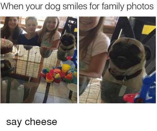 Dog Smile: When your dog smiles for family photos say cheese