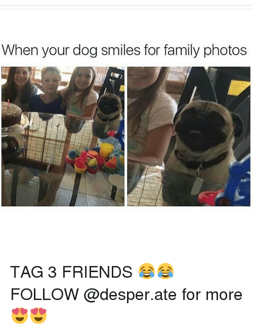 Dog Smile: When your dog smiles for family photos TAG 3 FRIENDS 😂😂 FOLLOW @desper.ate for more 😍😍