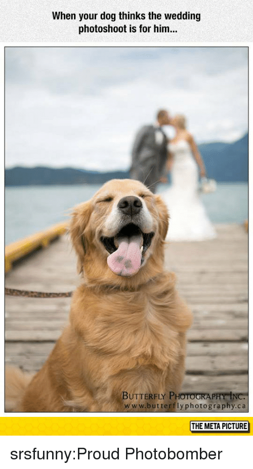 photoshoot: When your dog thinks the wedding  photoshoot is for him...  BUTTERFLY PHOTOGRA  www.butterflyphotography.ca  THE META PICTURE srsfunny:Proud Photobomber