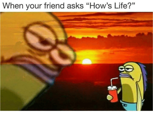 """Hows Life: When your friend asks """"How's Life?"""""""