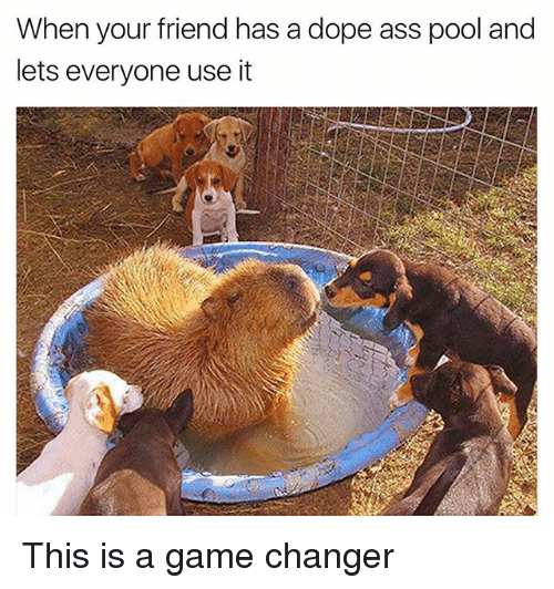 Ass, Dope, and Funny: When your friend has a dope ass pool and  lets everyone use it This is a game changer