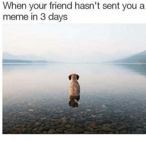 Meme, Friend, and You: When your friend hasn't sent you a  meme in 3 days