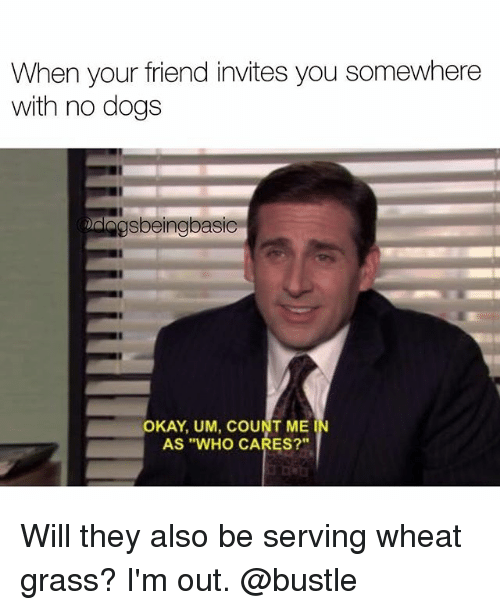 "Dogs, Memes, and Okay: When your friend invites you somewhere  with no dogs  gsbeingbasic  OKAY, UM, COUNT ME  AS ""WHO CARES?""  IN Will they also be serving wheat grass? I'm out. @bustle"