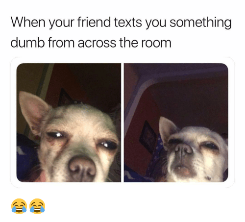 Dumb, Funny, and Texts: When your friend texts you something  dumb from across the room 😂😂