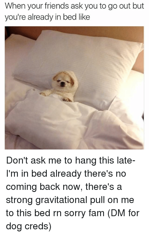 In Bed Like: When your friends ask you to go out but  you're already in bed like Don't ask me to hang this late- I'm in bed already there's no coming back now, there's a strong gravitational pull on me to this bed rn sorry fam (DM for dog creds)