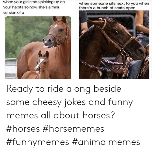 Jokes And: when your girl starts picking up on  when someone sits next to you when  there's a bunch of seats open  your habits so now she's a mini  version of u Ready to ride along beside some cheesy jokes and funny memes all about horses?#horses #horsememes #funnymemes #animalmemes