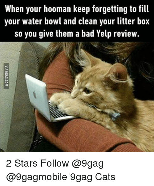 9gag, Boxing, and Memes: When your hooman keep forgetting to  fill  your water bowl and clean your litter box  so you give them a bad Yelp review. 2 Stars Follow @9gag @9gagmobile 9gag Cats