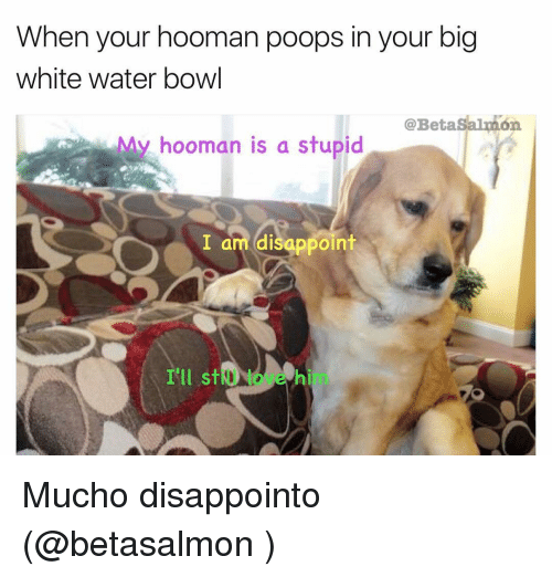 Disappointed, Memes, and Poop: When your hooman poops in your big  white water bowl  @Betasalmon  My hooman is a stupid  I am disappoint  I'll st Mucho disappointo (@betasalmon )