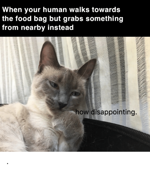 disappointing: When your human walks towards  the food bag but grabs something  from nearby instead  how disappointing. .