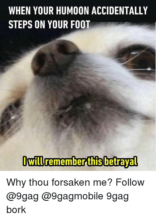 Borks: WHEN YOUR HUMOON ACCIDENTALLY  STEPS ON YOUR FOOT  Owill remember this betrayal Why thou forsaken me? Follow @9gag @9gagmobile 9gag bork