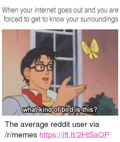 """What Kind Of Bird Is This: When your internet goes out and you are  forced to get to know your surroundings  0  what kind of bird is  this? <p>The average reddit user via /r/memes <a href=""""https://ift.tt/2HlSaOP"""">https://ift.tt/2HlSaOP</a></p>"""