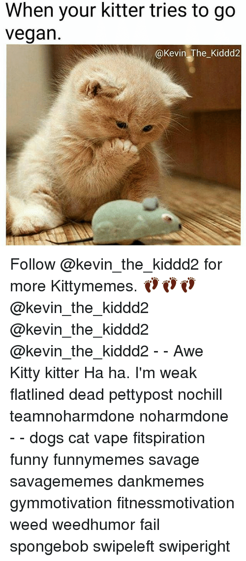 Dogs, Fail, and Funny: When your kitter tries to go  vegan.  Kevin The Kiddd2 Follow @kevin_the_kiddd2 for more Kittymemes. 👣👣👣 @kevin_the_kiddd2 @kevin_the_kiddd2 @kevin_the_kiddd2 - - Awe Kitty kitter Ha ha. I'm weak flatlined dead pettypost nochill teamnoharmdone noharmdone - - dogs cat vape fitspiration funny funnymemes savage savagememes dankmemes gymmotivation fitnessmotivation weed weedhumor fail spongebob swipeleft swiperight