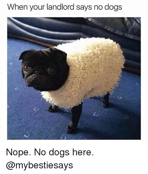 Dogs, Nope, and Girl Memes: When your landlord says no dogs Nope. No dogs here. @mybestiesays