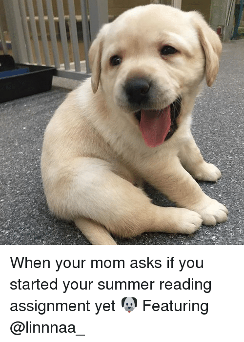 Memes, Summer, and Mom: When your mom asks if you started your summer reading assignment yet 🐶 Featuring @linnnaa_