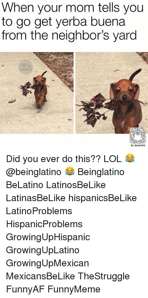 Memes, 🤖, and Did: When your mom tells you  to go get yerba buena  from the neighbor's yard  SC: BLSNAPZ Did you ever do this?? LOL 😂 @beinglatino 😂 Beinglatino BeLatino LatinosBeLike LatinasBeLike hispanicsBeLike LatinoProblems HispanicProblems GrowingUpHispanic GrowingUpLatino GrowingUpMexican MexicansBeLike TheStruggle FunnyAF FunnyMeme