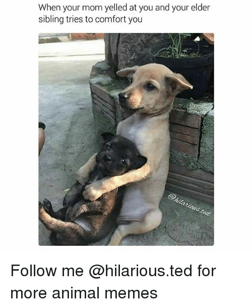 Funny, Memes, and Ted: When your mom yelled at you and your elder  sibling tries to comfort you Follow me @hilarious.ted for more animal memes