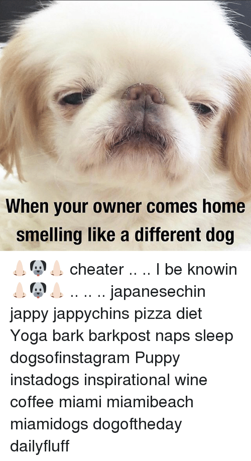 When Your Owner Comes Home Smelling Like A Different Dog