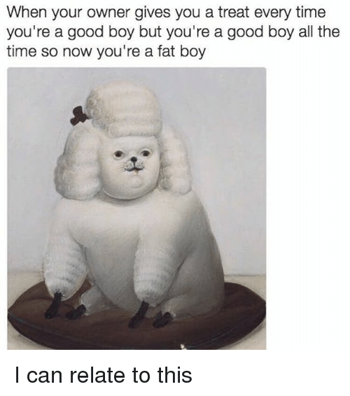 Memes, Good, and Time: When your owner gives you a treat every time  you're a good boy but you're a good boy all the  time so now you're a fat boy I can relate to this