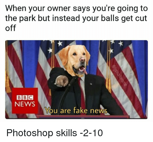 You Are Fake News: When your owner says you're going to  the park but instead your balls get cut  off  BBC  NEWS  You are fake news Photoshop skills -2-10