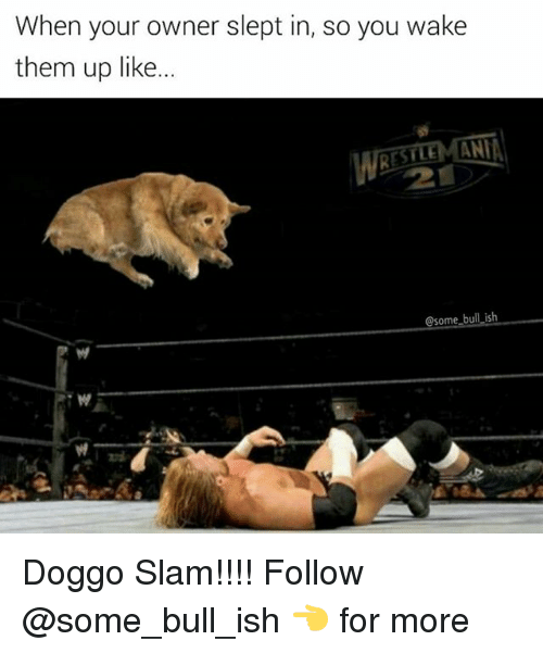 Anna, Memes, and 🤖: When your owner slept in, so you wake  them up like.  ANNA  @some bull ish Doggo Slam!!!! Follow @some_bull_ish 👈 for more