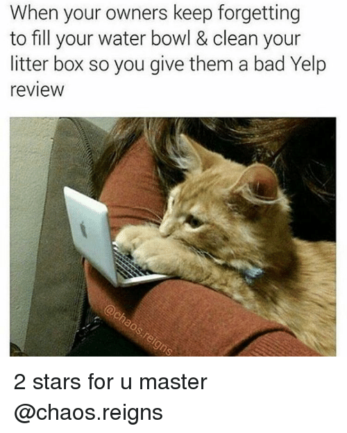 Bad, Boxing, and Bowling: When your owners keep forgetting  to fill your water bowl & clean your  litter box so you give them a bad Yelp  review 2 stars for u master @chaos.reigns