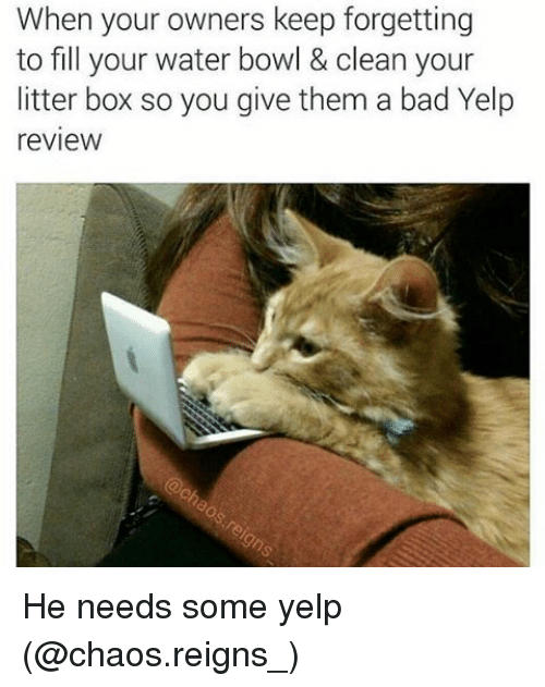 Boxing, Memes, and Bowling: When your owners keep forgetting  to fill your water bowl & clean your  litter box so you give them a bad Yelp  review He needs some yelp (@chaos.reigns_)