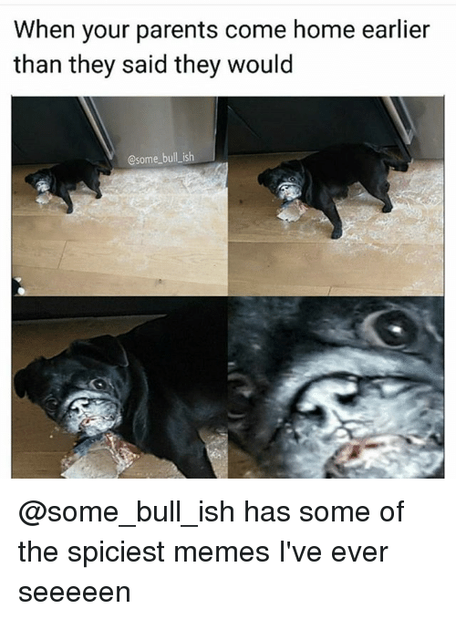 Memes, Parents, and Home: When your parents come home earlier  than they said they would  @some bull ish @some_bull_ish has some of the spiciest memes I've ever seeeeen