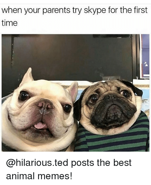 Animated Memes: when your parents try skype for the first  time @hilarious.ted posts the best animal memes!