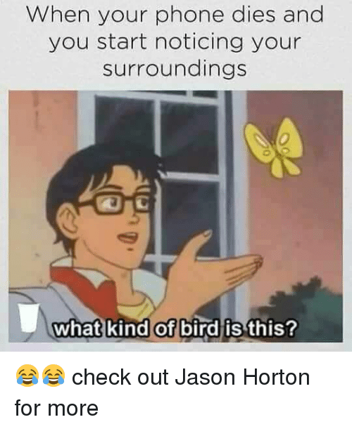 What Kind Of Bird Is This: When your phone dies and  you start noticing your  surroundings  what kind of bird is this? 😂😂 check out Jason Horton for more