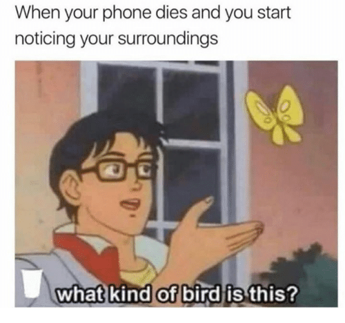 Phone, You, and What: When your phone dies and you start  noticing your surroundings  what kind of bird is  this?