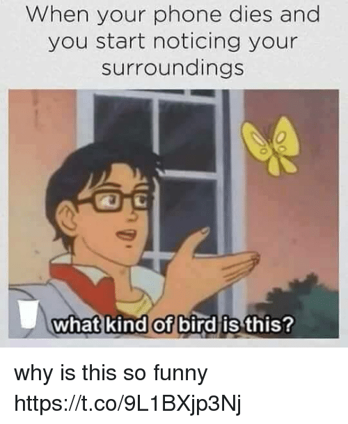 Funny, Phone, and Girl Memes: When your phone dies and  you start noticing your  surroundings  0  what kind of bird is  this? why is this so funny https://t.co/9L1BXjp3Nj