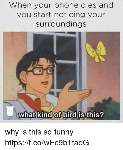 Funny, Phone, and Girl Memes: When your phone dies and  you start noticing your  surroundings  0  what kind of bird is  this? why is this so funny https://t.co/wEc9b1fadG