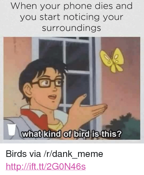 """What Kind Of Bird Is This: When your phone dies and  you start noticing your  surroundings  0  what kind of bird is  this? <p>Birds via /r/dank_meme <a href=""""http://ift.tt/2G0N46s"""">http://ift.tt/2G0N46s</a></p>"""