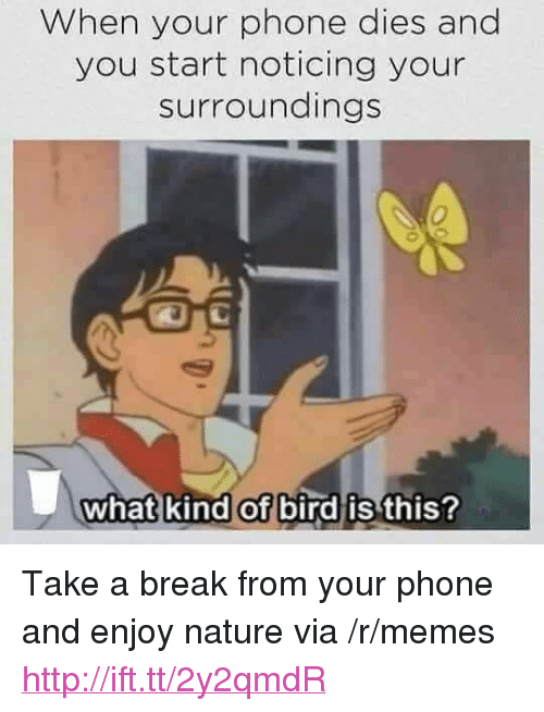 """What Kind Of Bird Is This: When your phone dies and  you start noticing your  surroundings  0  what kind of bird is  this? <p>Take a break from your phone and enjoy nature via /r/memes <a href=""""http://ift.tt/2y2qmdR"""">http://ift.tt/2y2qmdR</a></p>"""