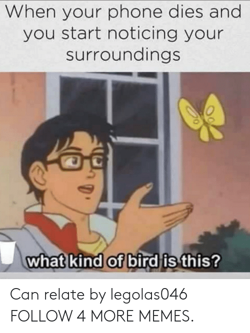What Kind Of Bird Is This: When your phone dies and  you start noticing your  surroundings  what kind of bird is this? Can relate by legolas046 FOLLOW 4 MORE MEMES.