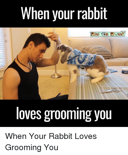 🤖: When your rabbit  BINT THE RVNNT  loves grooming you When Your Rabbit Loves Grooming You
