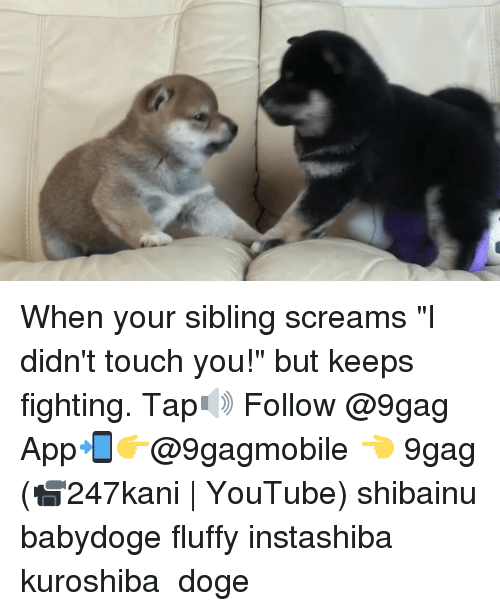 "Fluffiness: When your sibling screams ""I didn't touch you!"" but keeps fighting. Tap🔊 Follow @9gag App📲👉@9gagmobile 👈 9gag (📹247kani 