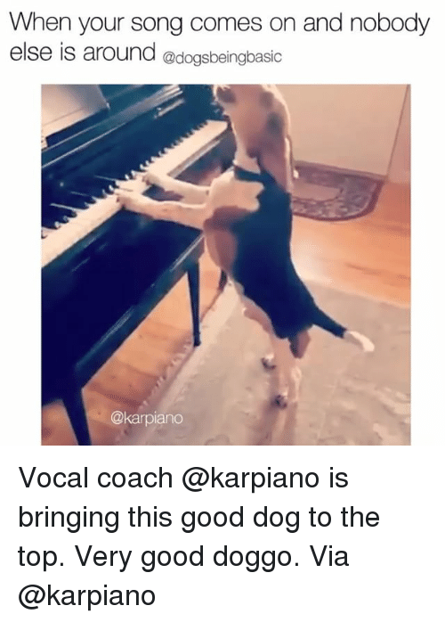 Memes, Good, and 🤖: When your song comes on and nobody  else is around @dogsbeingbasic  @karpiand Vocal coach @karpiano is bringing this good dog to the top. Very good doggo. Via @karpiano