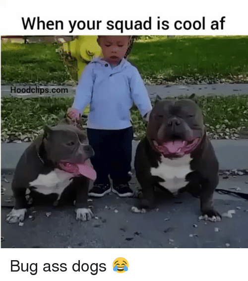 Funny: When your squad is cool af  Hood clips.com Bug ass dogs 😂