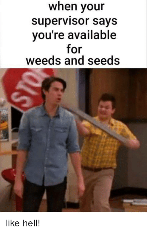 Military, Hell, and Weeds: when your  supervisor sayS  you're available  for  weeds and seeds like hell!