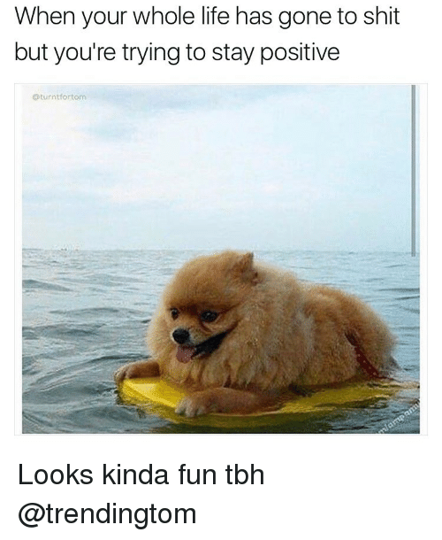 25+ Best Memes About Staying Positive | Staying Positive Memes |Funny Memes Stay Positive
