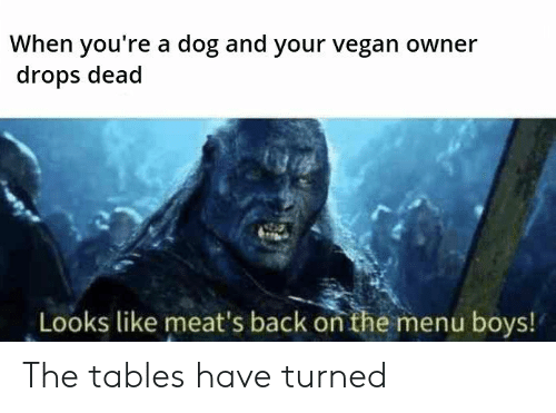 meats: When you're a dog and your vegan owner  drops dead  Looks like meat's back on the menu boys! The tables have turned